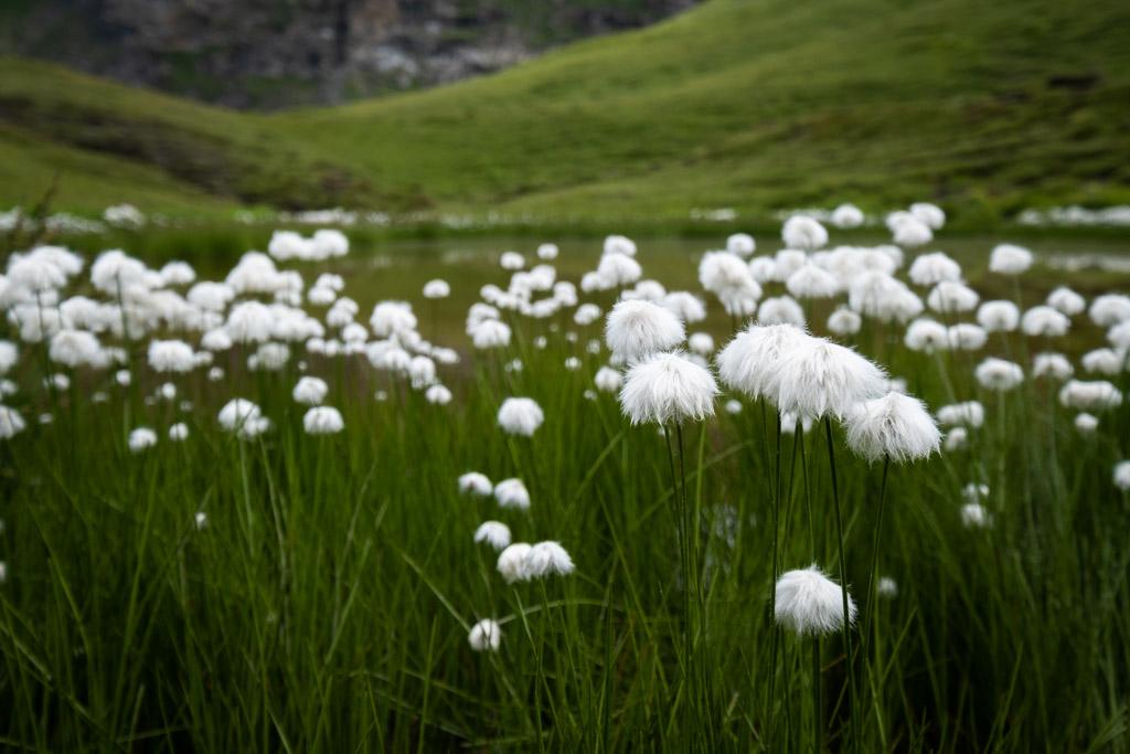 Via Alpina - Dans la montée vers le col Sefinafurgg