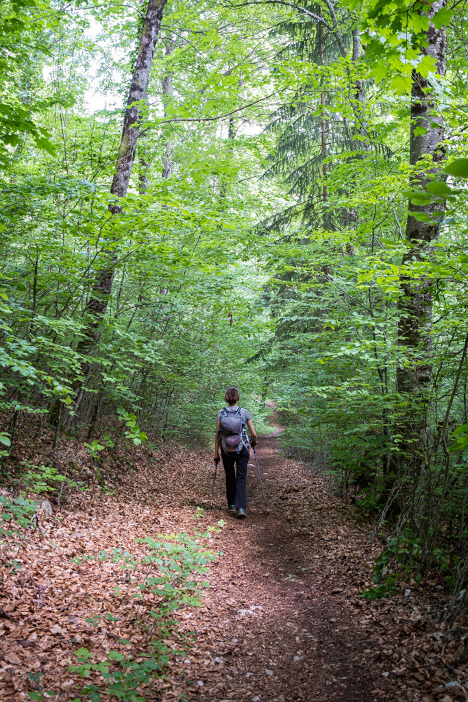 Sentier en forêt pour retourner au parking