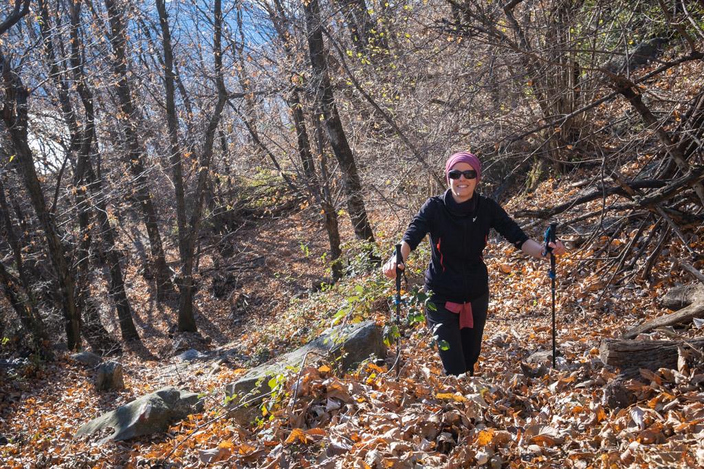 Montagne de feuilles mortes sur le sentier